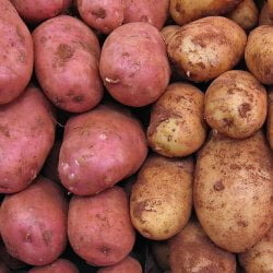 stack of red and russet potatoes