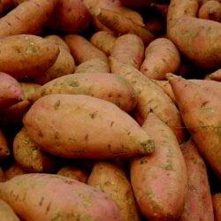 stack of sweet potatoes