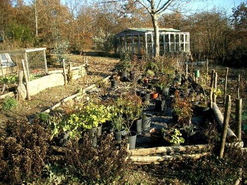 Gardening in the winter for vegetables