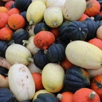 loads of winter squashes